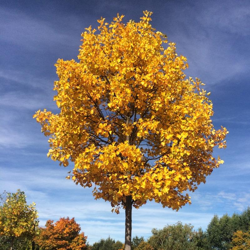 Outono na Alemanha