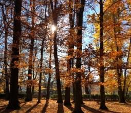 Outono-na-Alemanha (3)