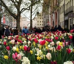 Primavera-na-Alemanha (4)