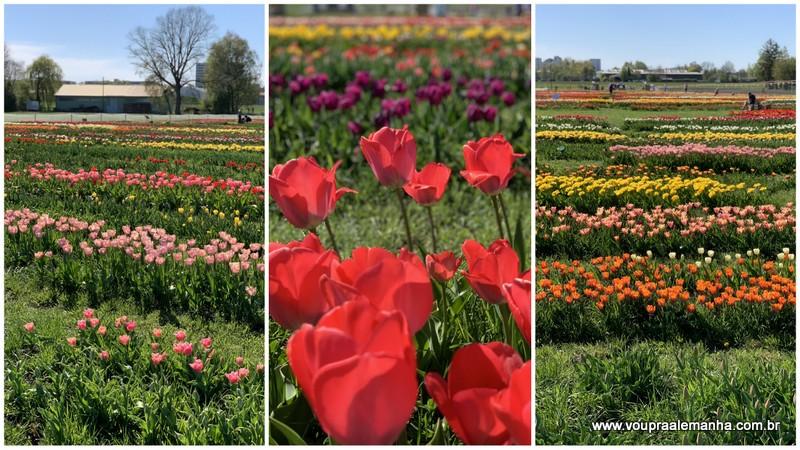 Campo de tulipas em Munique