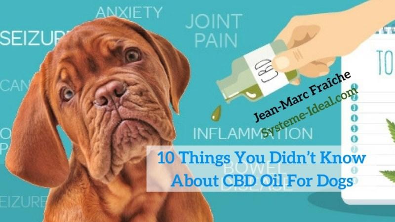 10-Things-You-Didn-t-Know-About-CBD-Oil-For-Dogs-Jean-Marc-Fraiche-VousEtesUnique.com