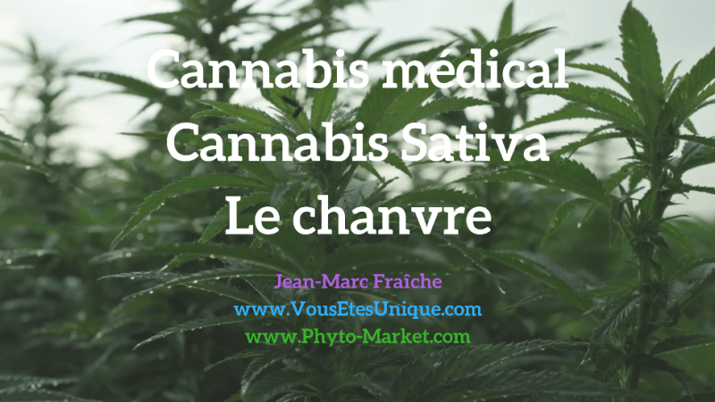 Cannabis-médical-Cannabis-Sativa-chanvre-Jean-Marc-Fraiche-VousEtesUnique