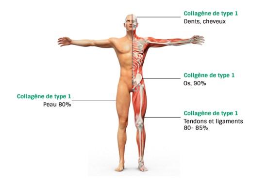 Collagene-marin-Naticol-Arti-Skin-Rlp-Concept-Jean-Marc-Fraiche-VousEtesUnique.com
