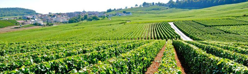 Travail-a-Domicile-Champagne-Ardenne-Jean-Marc-Fraiche