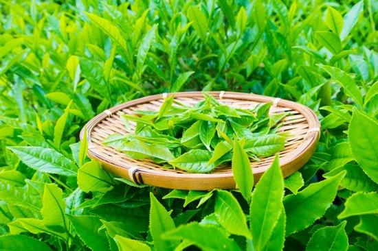 vitalitea-green-tea-Jean-Marc-Fraiche-VousEtesUnique-HB-Naturals