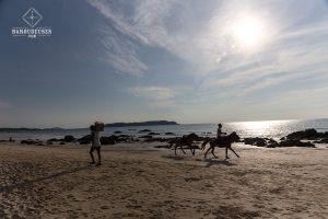 Plage_chevaux - Ngapali