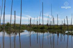 Vie quotidienne - Lac Inle