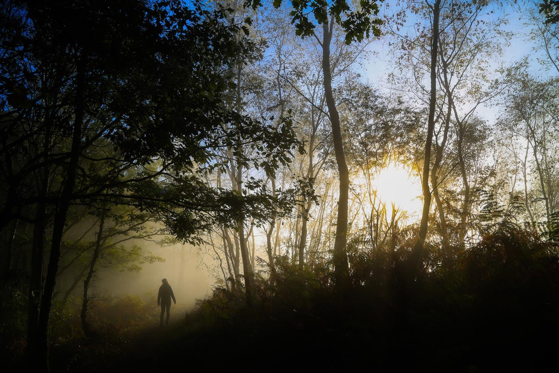 Pauline en forêt - péripléties