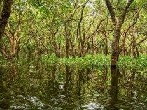 Découverte de la mangrove guadeloupéenne : en VTT des mers ou en kayak ?