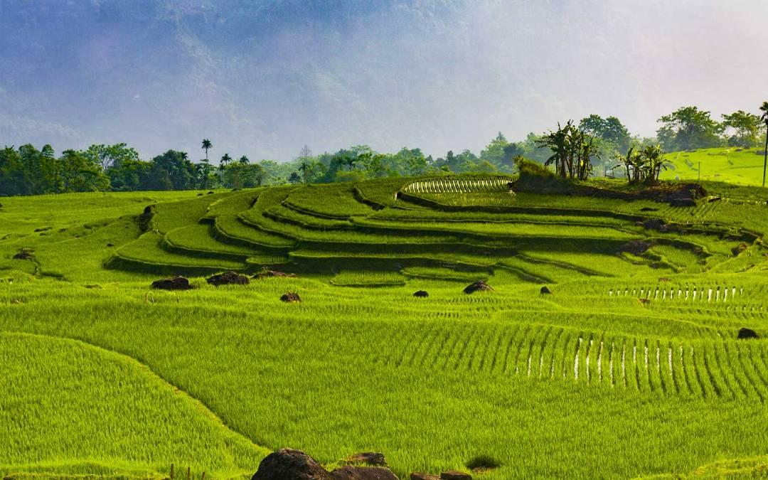 Ecotourisme dans la réserve de Pù Luông