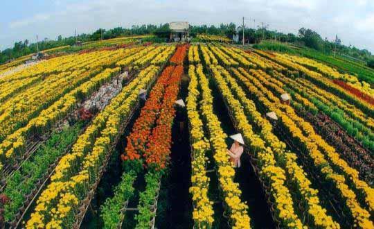 Champs de fleurs - Sadec, Vietnam