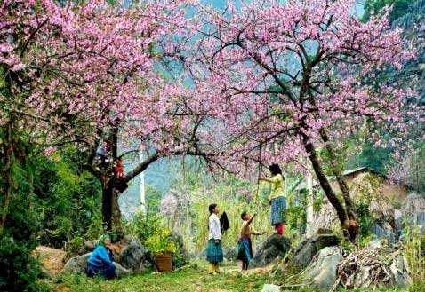 Paysages fleuris de Meo Vac - Vietnam