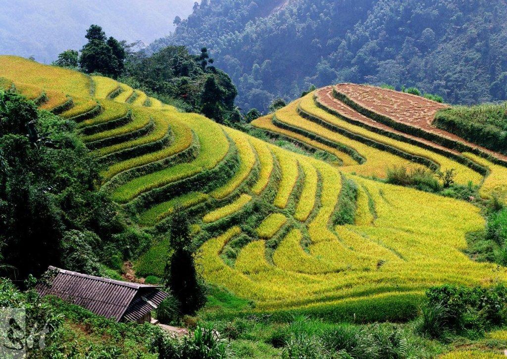Hoàng Su Phi, Vietnam