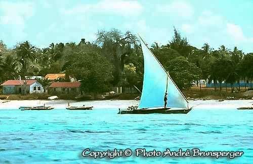 Baie de Jozani Zanzibar Excursion Circuit nager avec les Dauphins Zanzibar 10 jours. Voyage séjour Zanzibar sur l'île aux épices jardin de l'océan Indien. Zanzibar océan et Dauphins.