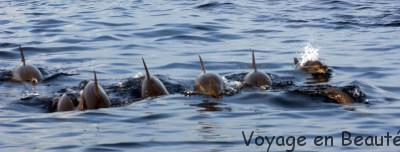 Un banc de dauphins