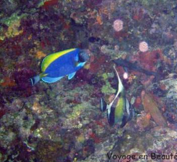 Poissons multicolores aux maldives par voyage en beauté