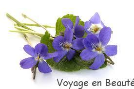 L'amour est un bouquet de violette