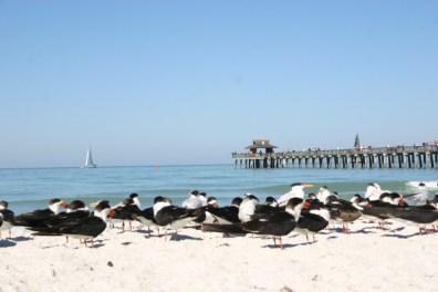 Plage de Naples en Floride