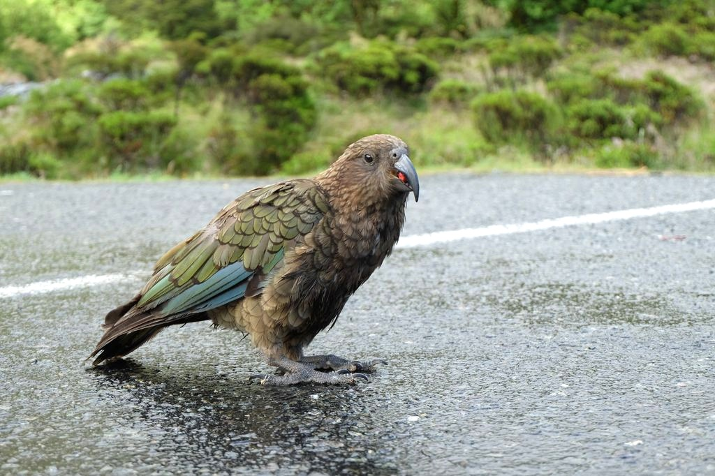 roadtrip-nouvelle-zelande-milford-sound-croisiere--blog-voyage-07