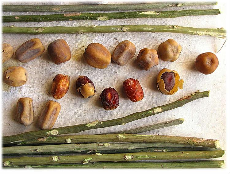 huile-balanites-dattier-desert-bio-avis-test-soebio