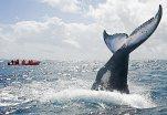 baleines à Sainte-Marie