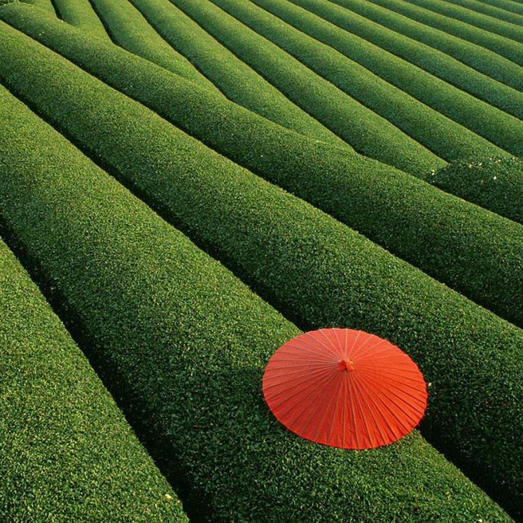 14. Fields of Tea - China