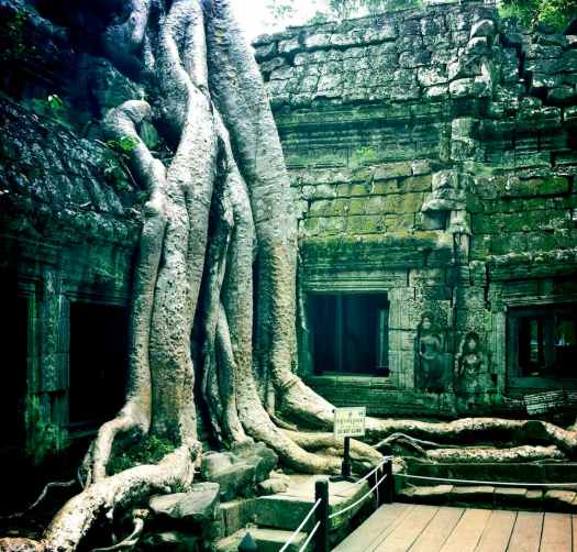 ta-prohm-tree-roots