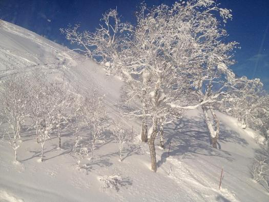 niseko-fresh-powder