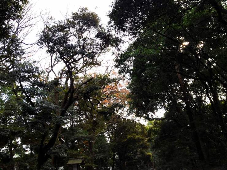 meiji-shrine-gardens