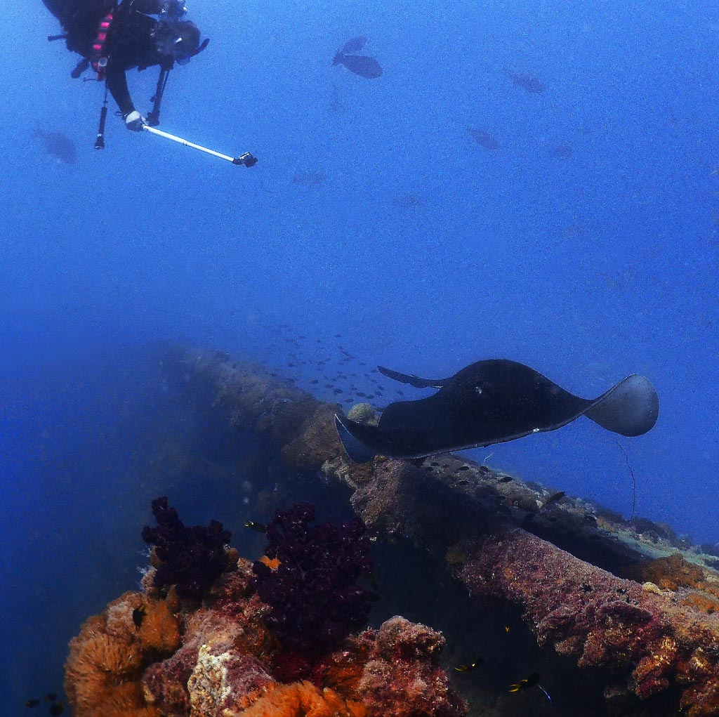 Diann, Filming a Ray on the Yongola Wreck in Australia - 09/2015.