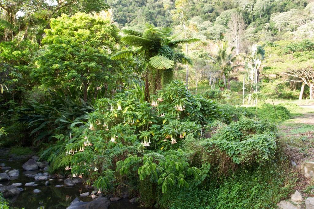 sarramea-plantes