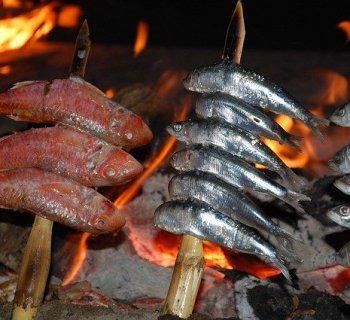 grillage Malaga