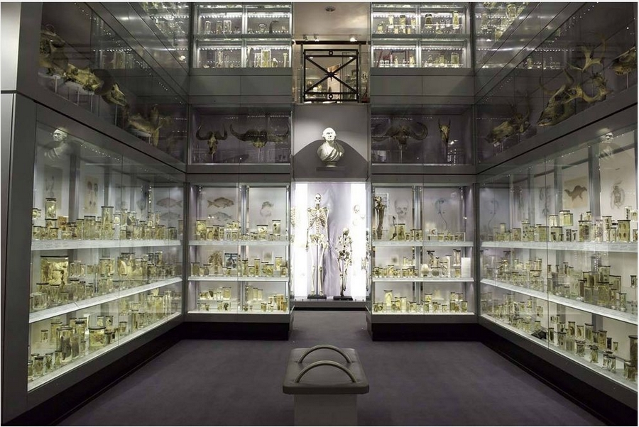 Hunterian museum - London, England