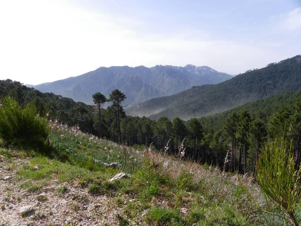 Près de Ghisoni - Corse
