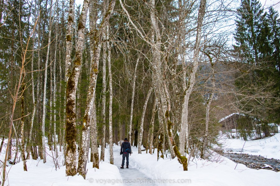 A nice stroll in the snowy forest - Les Diablerets, Switzerland