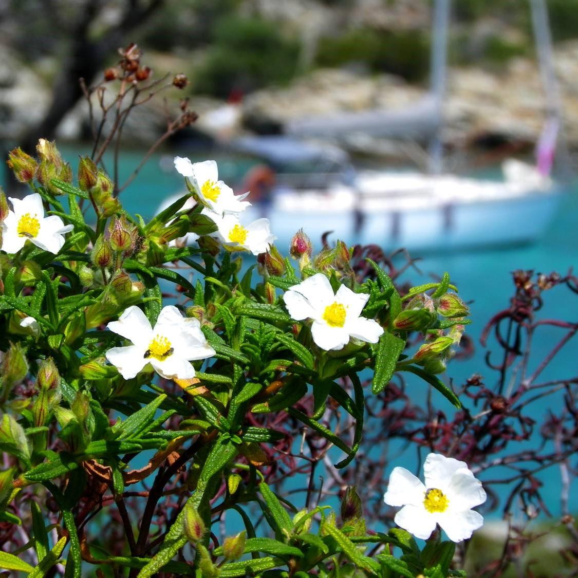 Corse carrée – Voyageurs Sans Frontieres (4)