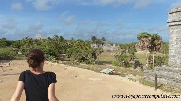 Les palmiers présents au milieu des ruines Mayas de Tulum.