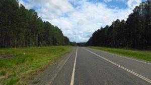 "Los bosques del ""Great Sandy National Park"""