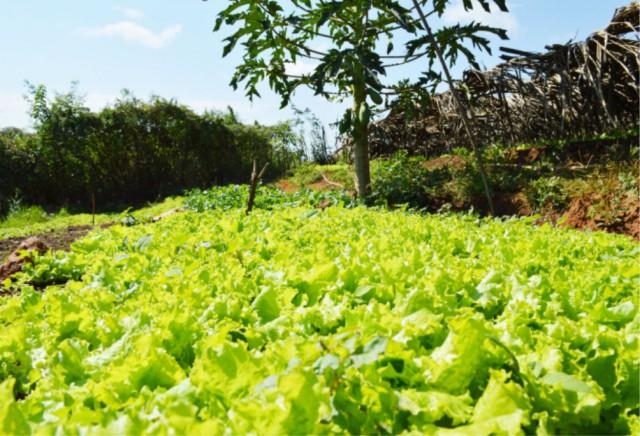 Encontro reúne agricultores familiares em Buenos Aires