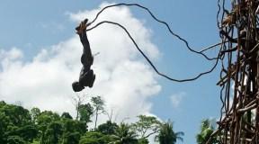 bungee jumping - domorodci