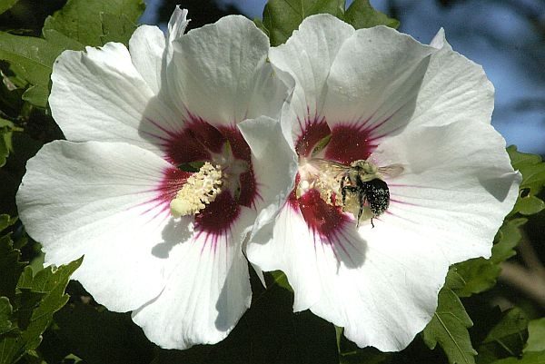 The Rose of Sharon. Steinbeck's other botany-based character, Cactus of Doug, is less widely known and regarded.