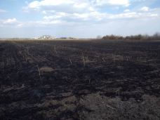 incendiu vegetatie 3
