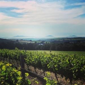 Zuid-Afrika wijngaard Stellenbosch Knorhoek