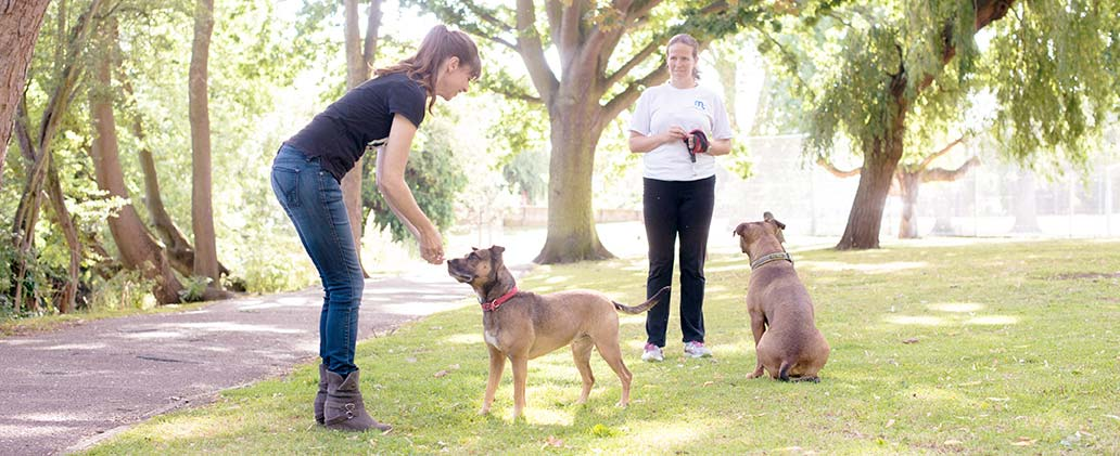 What Does It Take to be a Good Dog Trainer?