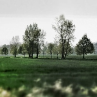 ilustrace: stromořadí u Dušník nad Vltavou