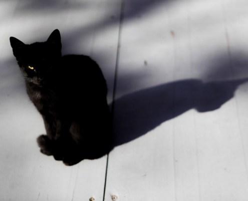 Nuša Švara - The cat