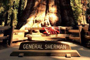 General Sherman-1-HP