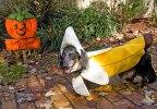 Собака в костюме из банана