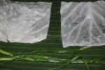 Отварные листья капусты и лук