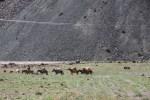Аргентинские проводники возвращаются после восхождения на Аконкагуа. Мендоса, Аргентина